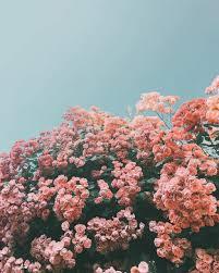 Flower aesthetic, Flower wallpaper ...