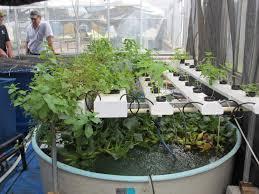 aquaponic gardening. intro to aquaponics aquaponic gardening s