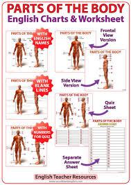 Human Body Parts Chart In English English Parts Of The Body Charts Woodward English
