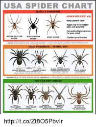 memes weave and mouse usa spider chart deadly dangerous spider bite first