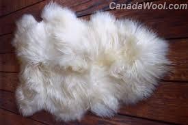 photo of canada wool orillia on canada canadawool com canadawool com 100 icelandic sheepskin rug