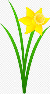 daffodil free content clip art free flowers clipart