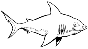 Small Picture hammerhead shark coloring page samantha bell within hammerhead