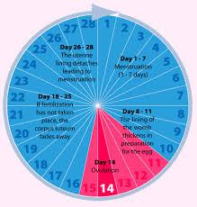 28 Veritable Pregnancy Chances