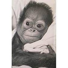 Pyramid America Snuggle Baby Monkey Poster Art Print