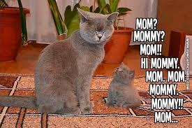 Vsledek obrzku pro Swag kitten