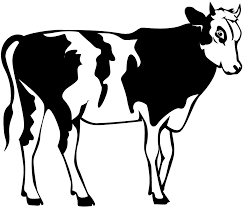 cow clipart black and white. Perfect Black Cow Clipart Black And White Clipart White Cows  Planets U