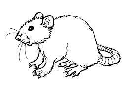 Small Picture Rat Coloring Pages Coloring Page