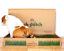 fresh patch real grass disposable dog potty box