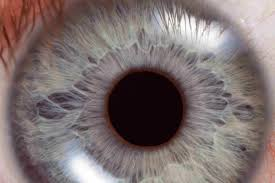 How Do Eyes React To Light How Doctors Test Pupil Reflexes