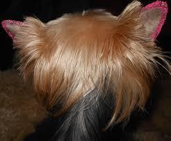 фотогалерея стрижка собак и кошек на дому одесса