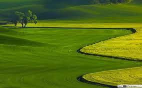 Green landscape view HD wallpaper download