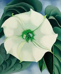 jimson weed white flower no 1 by georgia o keeffe