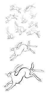 Wild rabbit sketches by amy holliday