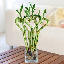 low light indoor plants you can