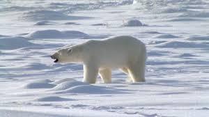 Resultado de imagen de frío polar
