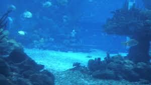 underwater restaurant disney world. Simple Disney Coral Reef Restaurant Disney World And Underwater Restaurant