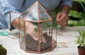 positioning plants in the terrarium