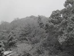 京都 嵐山温泉 旅館 花筏 花筏からお知らせ