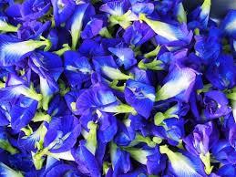蝶豆花的圖片搜尋結果