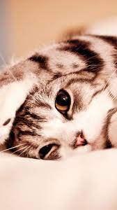 Cute Cat Mobile Wallpapers - Top Free ...