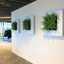 modern office plants. Office Plants Modern