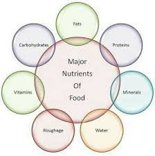 Protein Vitamins Minerals Fats And Carbohydrates Chart Make A Flow Chart On Components Of Food With Examples