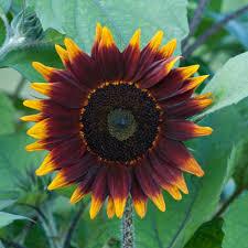 photo by image courtesy of national garden bureau