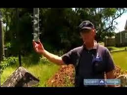 Bird Garden Ideas Pictures U0026 How To  HGTVBackyard Bird Watch
