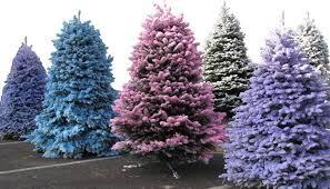Christmas Trees In Hawaii 2012  Home Design IdeasChristmas Tree Hawaii