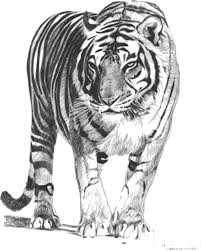 Small Picture Clipart Bengal Tiger