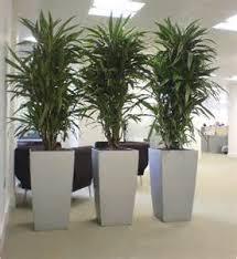 indoor office plants low light best low light office plants