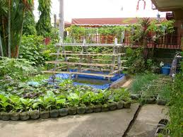 container garden vegetables. Container Gardening Vegetables Over Concrete Flor And Backyard Garden Mixed With Lush Palm Trees Also Striking Red Iron Fence A