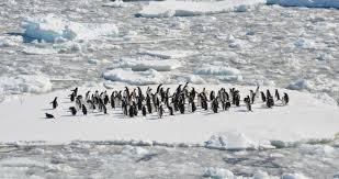 Image result for antarctica melting  images