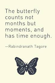 Butterfly Quotes About Life The Butterfly Counts Not Months But