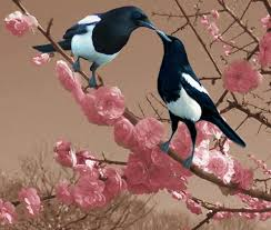 Small Picture Black Billed Magpie Pica hudsonia a bird in the crow family