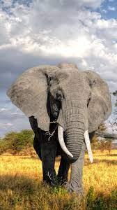 Trees, grass, elephant 750x1334 iPhone ...