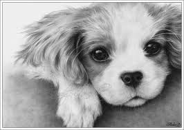 Small Picture cavalier king charles dog art Its my first time drawing a