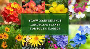8 low maintenance landscape plants for