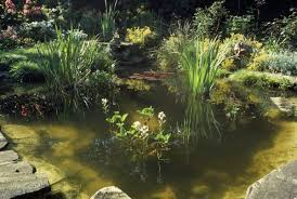 pm 4332 garden pond with a variety of