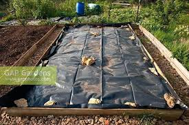 garden plastic sheets garden black plastic sheeting gap gardens black plastic sheet mulch acting as weed