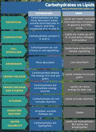 difference between carbohydrates and