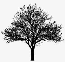 Tree Silhouette At Getdrawings Silhouette Tree Png Free