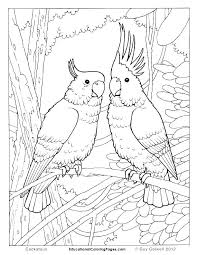 Coloring Page Birds Pages Realistic Bird Colouring To Animal Colorin