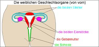 Pubertät und Sexualität - Biologie - Digitales Schulbuch