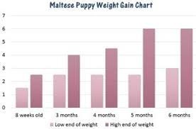 Puppy Age Chart Maltese Weight Chart Issues Information