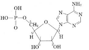 20 17 Nucleic Acid Structure Chemistry Libretexts
