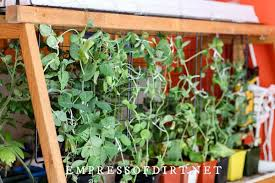 grow vegetables indoors easy beginner