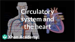 Flow Chart Of Nervous System In Human Beings Circulatory System And The Heart Video Khan Academy