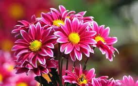 Αποτέλεσμα εικόνας για λουλουδια